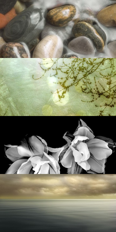 Donna Geissler Photography
